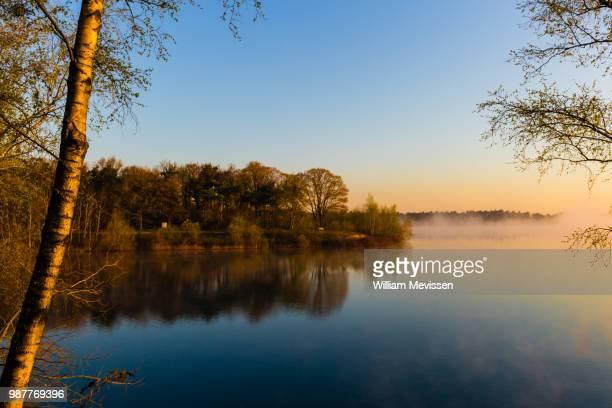 misty sunrise 'birch' - william mevissen ストックフォトと画像