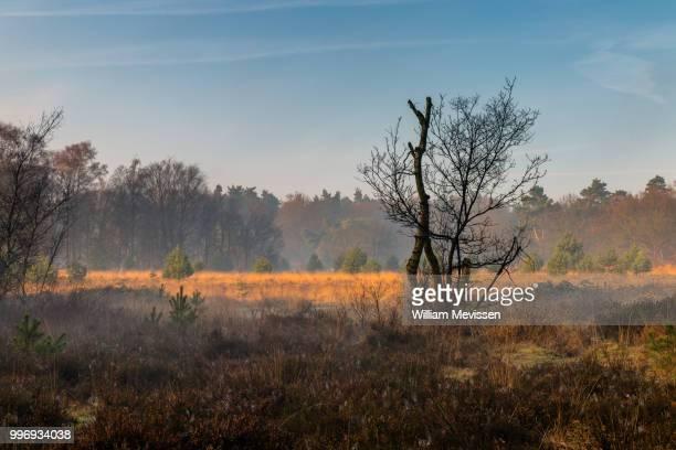 misty sunrise colors - william mevissen - fotografias e filmes do acervo