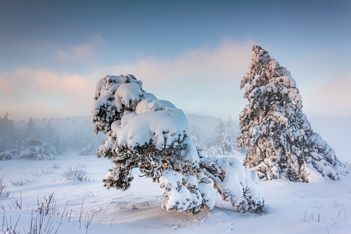 Misty sunrise in the winter forest in the mountains - gettyimageskorea