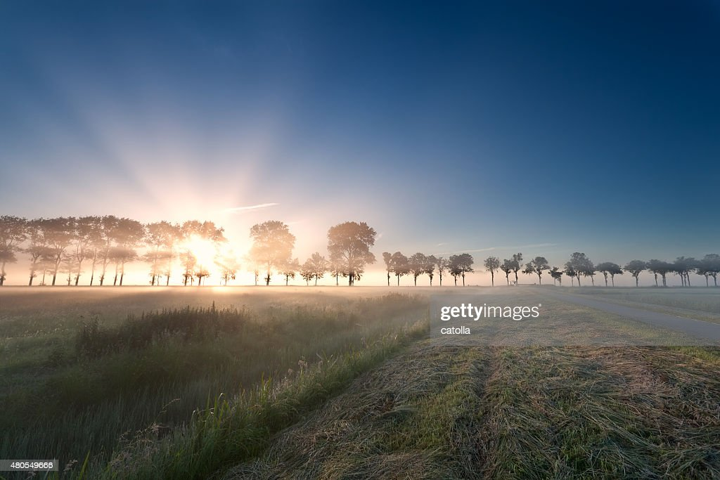 misty sunrise over meadow : Stock Photo