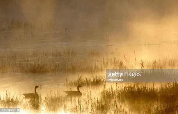 Misty sunrise  over the wetland