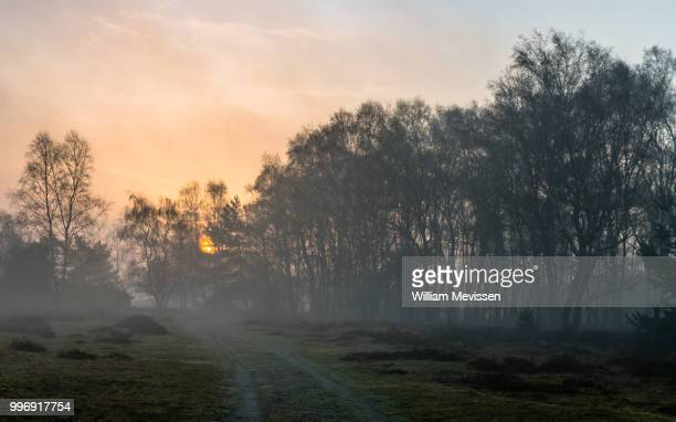 misty sunrise path - william mevissen stock pictures, royalty-free photos & images