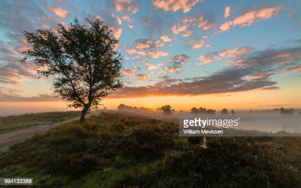 misty sunrise - william mevissen stockfoto's en -beelden