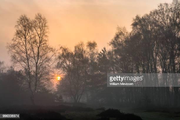 misty sunrise silhouettes - william mevissen fotografías e imágenes de stock