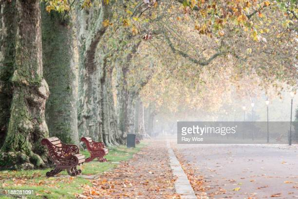 misty sunrise through a line of trees in battersea park - battersea park stock pictures, royalty-free photos & images