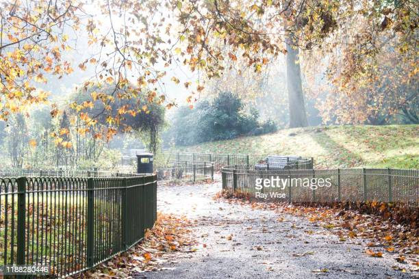 misty sunrise through the trees at battersea park in london - battersea park stock pictures, royalty-free photos & images