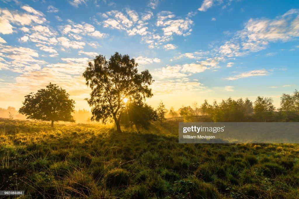 Misty Sunrise Tree : Stockfoto