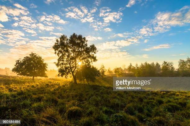 misty sunrise tree - william mevissen stockfoto's en -beelden