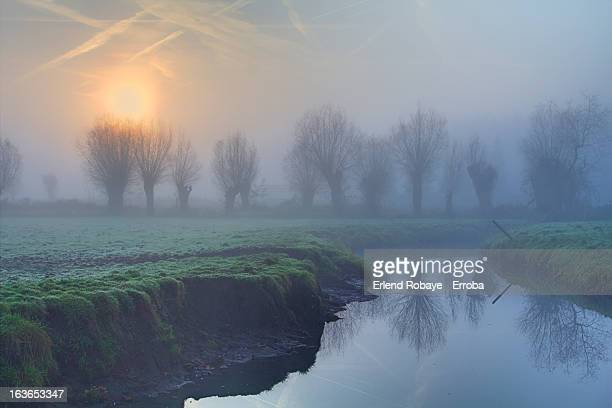 misty sunrise with pollard willows - mechelen stock pictures, royalty-free photos & images