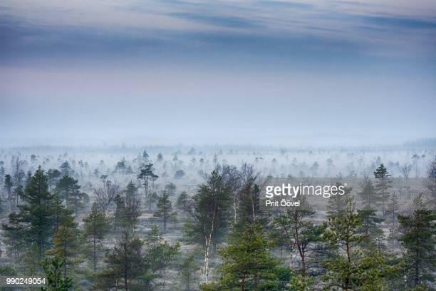 Misty trees at sunrise, Estonia.