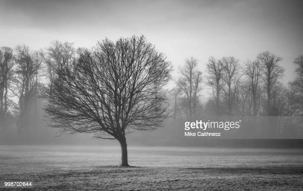 misty trees - mike caithness stock pictures, royalty-free photos & images
