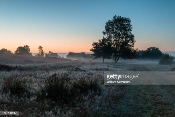 misty twilight bergerheide - william mevissen foto e immagini stock