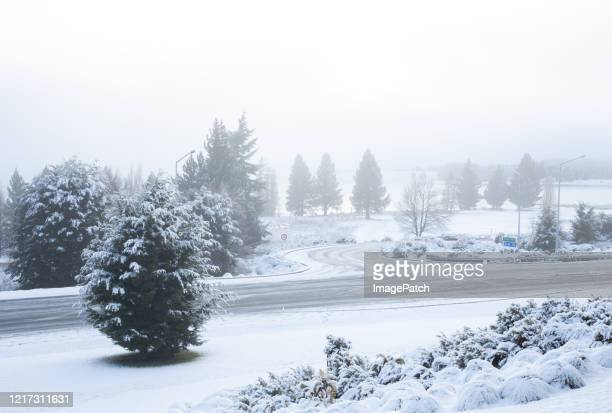 misty view of trees during evening snowfall - canterbury region new zealand stock pictures, royalty-free photos & images