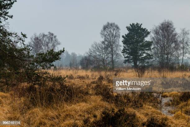 misty view - william mevissen bildbanksfoton och bilder