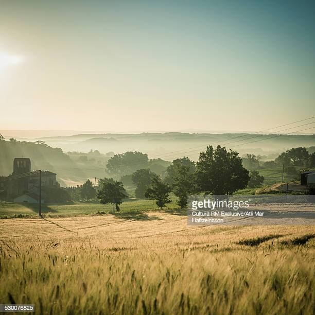 Misty wheatfields at sunrise, Prades, Midi Pyrenees, France