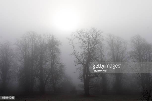 Misty winter woods silhouetted trees
