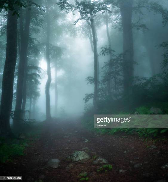 misty wood - mystery stock pictures, royalty-free photos & images