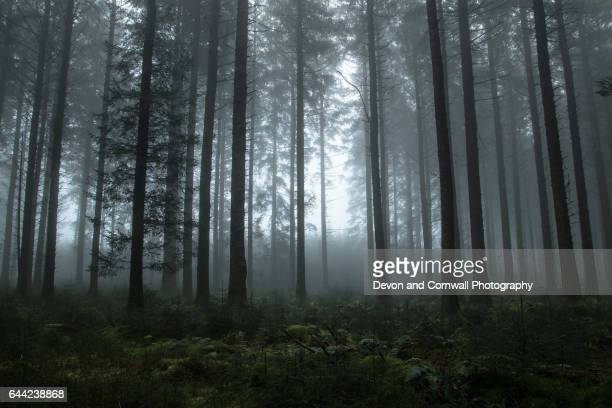 misty wood - woodland stock pictures, royalty-free photos & images
