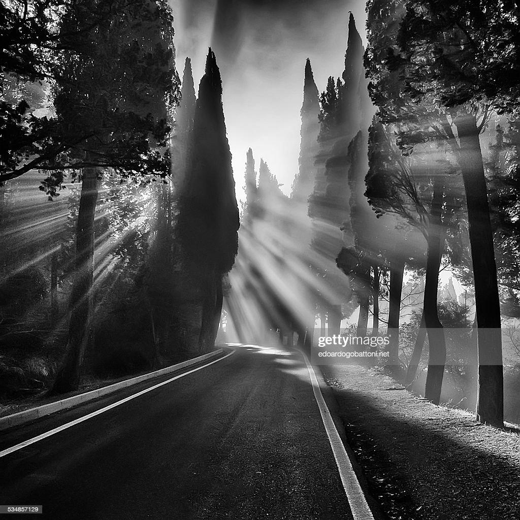 Mistyc light : Foto stock