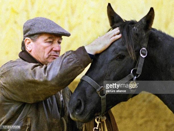 """Mit Streicheleinheiten für die Stute """"Mosquera"""" beginnt der Pferdetrainer Monty Roberts am 1.11.1998 auf einem Gestüt in Sottrum seine..."""