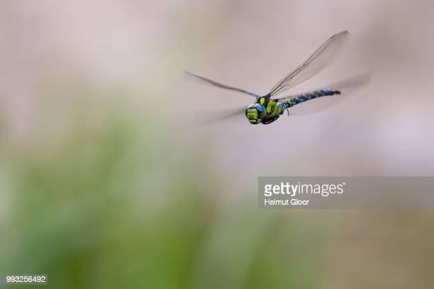 mit umfeld - dragonfly stock-fotos und bilder