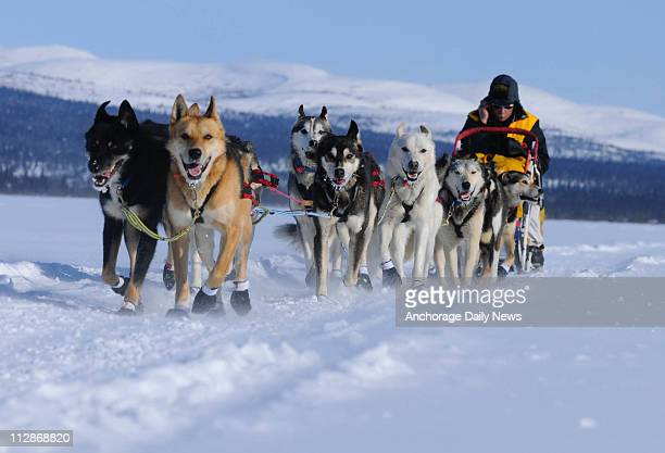 Mitch Seavey's team crosses the Tripod Flats between Kaltag and Unalakleet Alaska during the Iditarod on Sunday March 15 2009