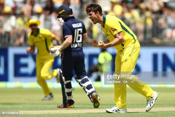 Mitchell Marsh of Australia celebrates the wicket of Eoin Morgan of England during game five of the One Day International match between Australia and...