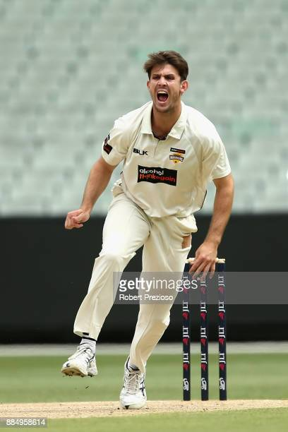 Mitchell Marsh of Western Australia appeals unsuccessfully during day two of the Sheffield Shield match between Victoria and Western Australia at...