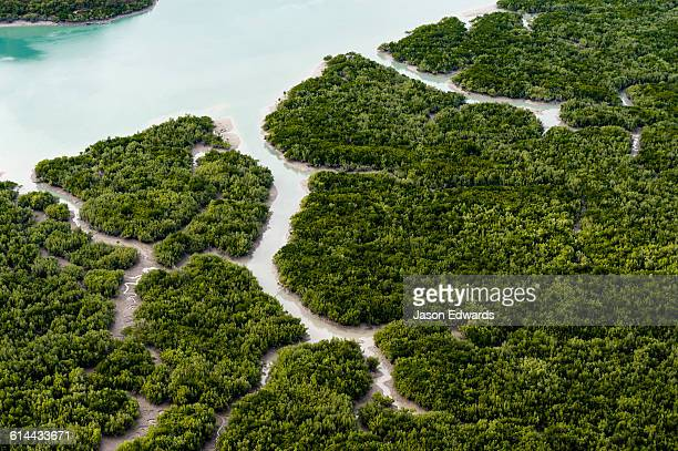 an aerial view of river tidal inlets winding their way through mangrove forests. - mangroves stock pictures, royalty-free photos & images