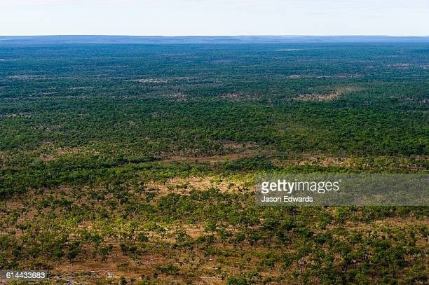 An aerial view of an open woodland on an arid plateau in the Kimberley.