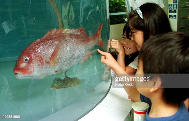 Mitsubishi Heavy Industry Show Their New Robot Fish At Mitsubishi Minatomirai Industry Museum In Yokohama Japon On May 18 1999 Mitsubishi developed...
