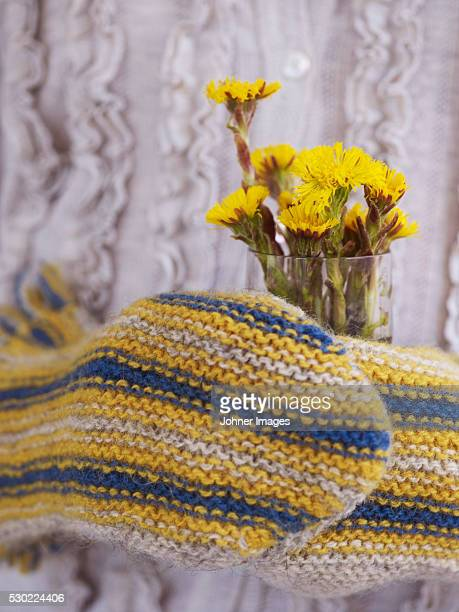 mittens and coltsfoot flowers in glass, close-up - coltsfoot stock photos and pictures