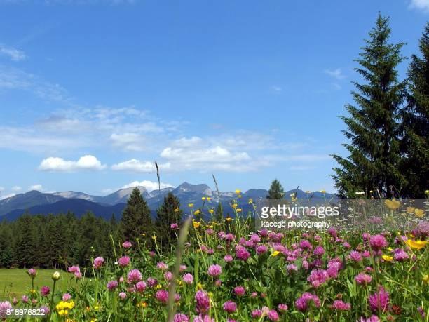 mittenwald, upper bavaria, germany - mittenwald fotografías e imágenes de stock