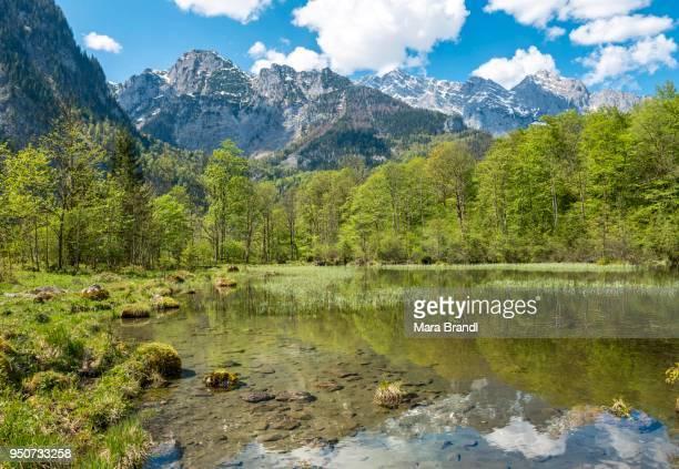 Mittersee, Salet am Koenigssee, Berchtesgadener Land, Upper Bavaria, Bavaria, Germany