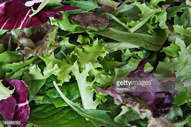 mix lettuce - leaf lettuce stock pictures, royalty-free photos & images