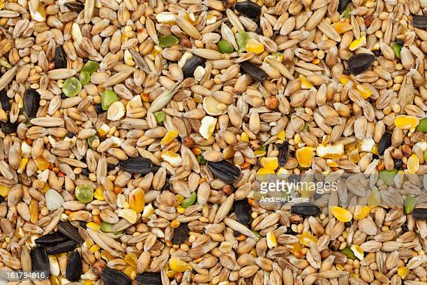 Mixed Bird Seed