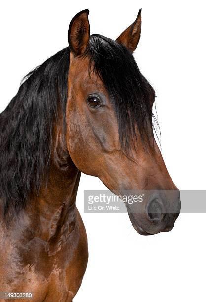 Mixed breed Horse