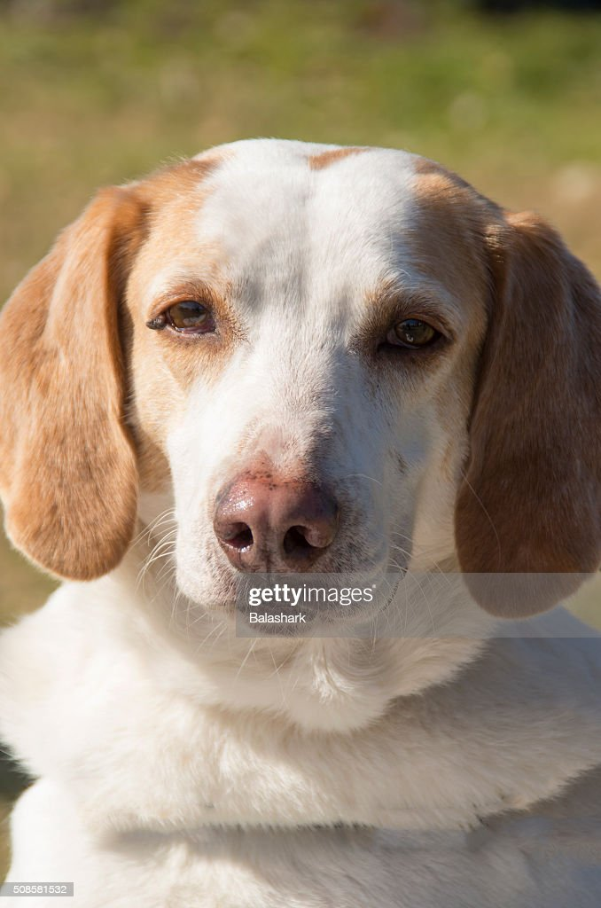 Mixed Breed Love : Stock Photo
