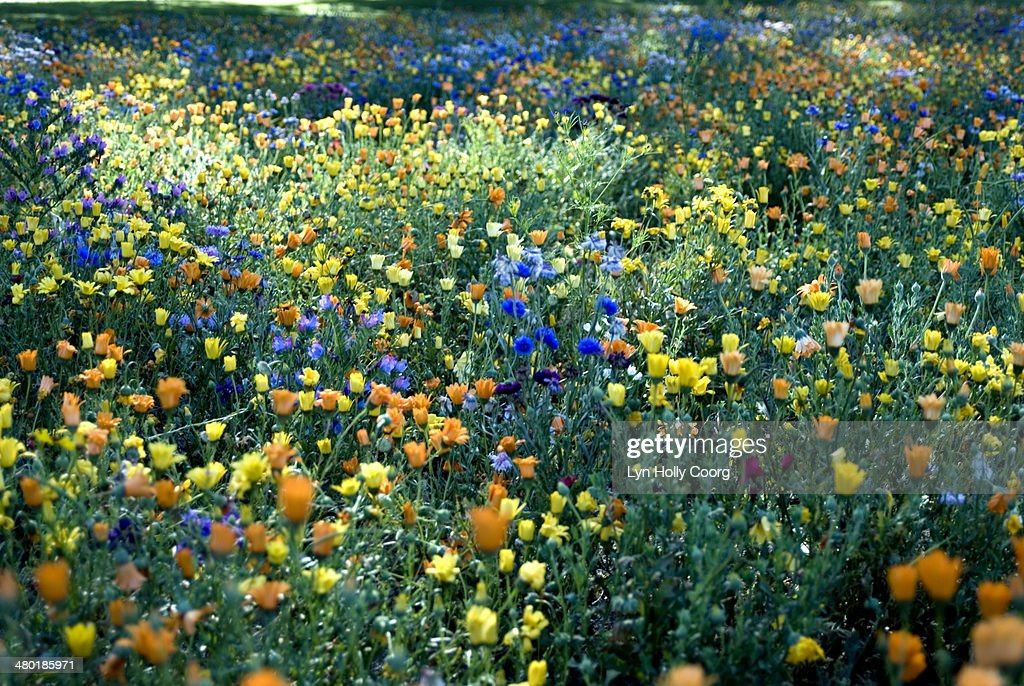 Mixed colourful wildflowers : Stock Photo
