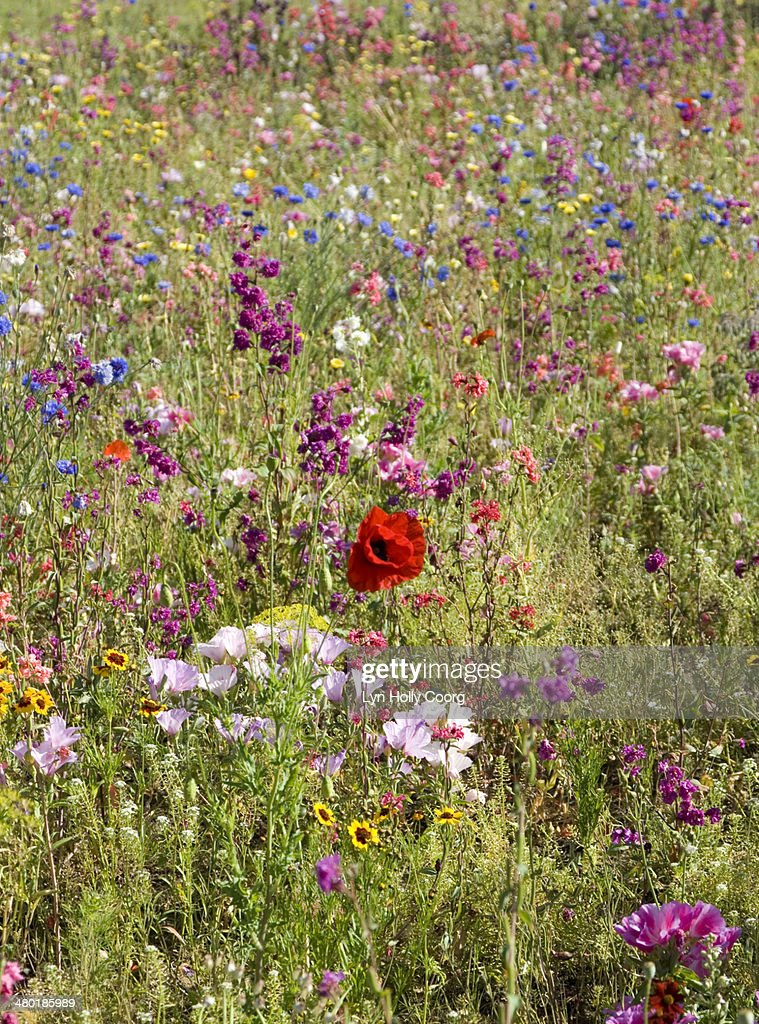 Mixed colourful wildflowers : ストックフォト