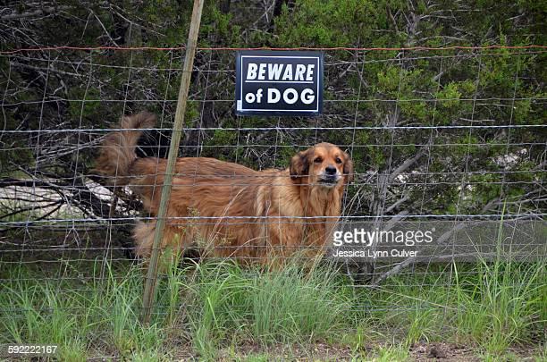 A mixed dog breed behind re of dog sign