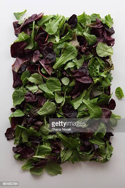 mixed greens - green salad stock pictures, royalty-free photos & images