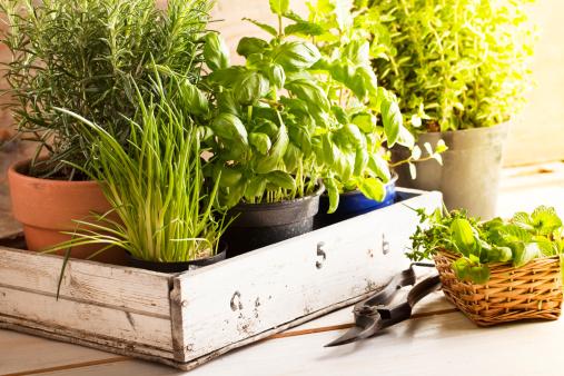 mixed herbs in pots 155375407