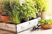 mixed herbs in pots