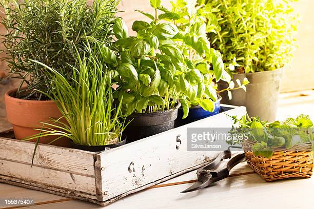 mixed herbs in pots - flower pot stock pictures, royalty-free photos & images