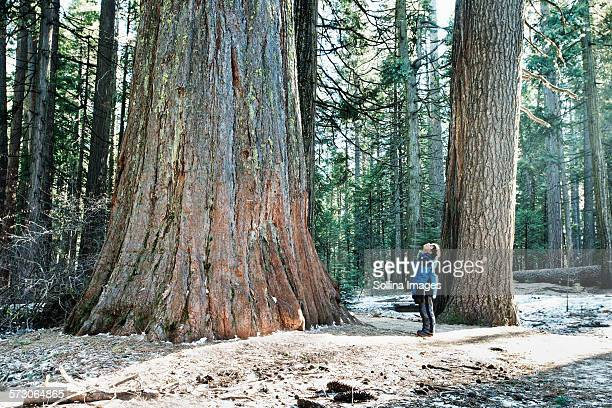 Mixed race boy admiring sequoia tree in forest