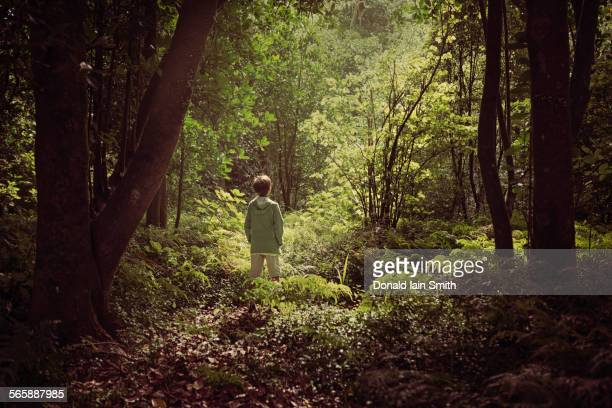 Mixed race boy exploring lush forest