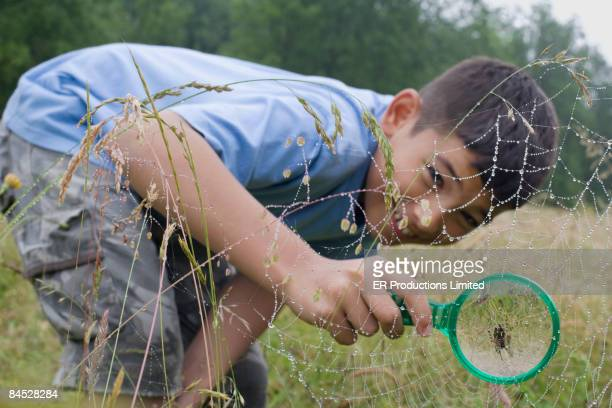 Mixed race boy looking at spider web with magnifying glass