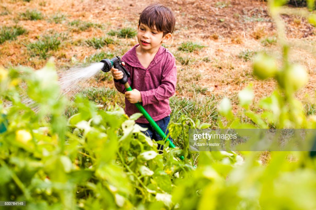 Mixed race boy watering plants in garden : Foto stock