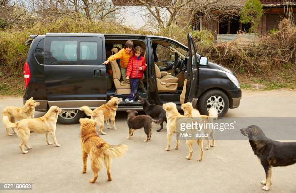 Mixed Race brothers exiting minivan to greet dogs